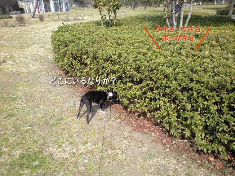 2008_03160010.jpg