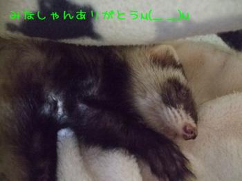2008_03180011.jpg