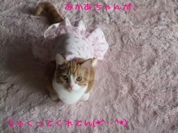 2008_03270004.jpg