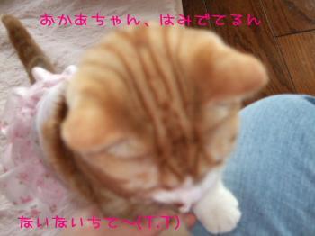 2008_03270009.jpg
