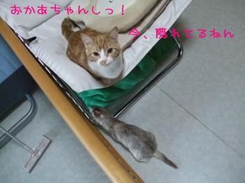 2008_04010002.jpg