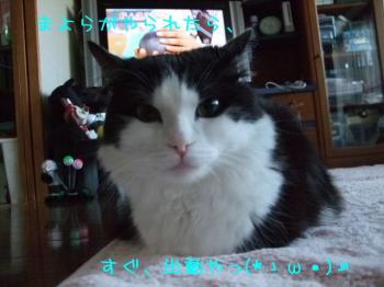 2008_04010007.jpg