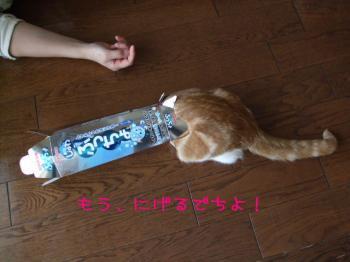 2008_04050008.jpg