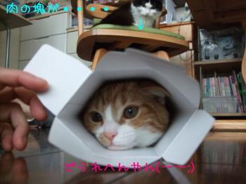 2008_04050010.jpg