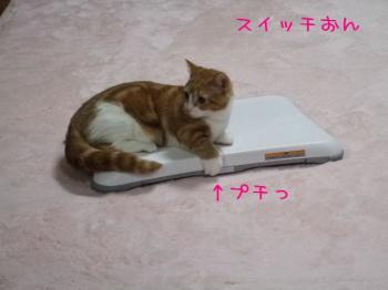 2008_04070050.jpg