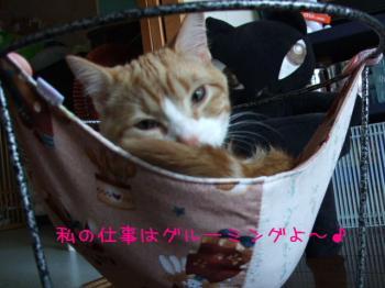 2008_04090006.jpg