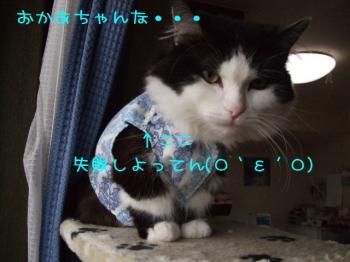 2008_04100004.jpg