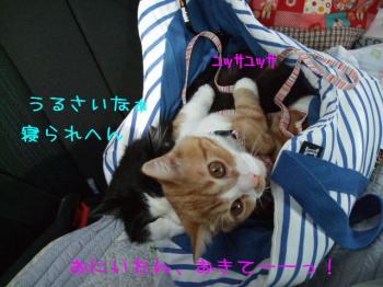 2008_04120007.jpg