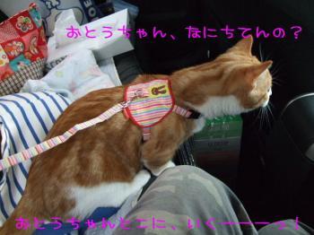 2008_04120009.jpg