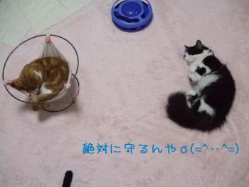 2008_04170003.jpg