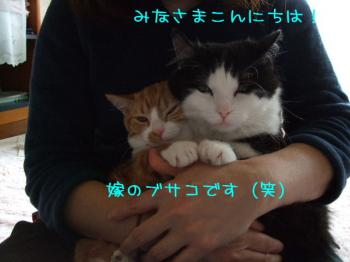 2008_04190001.jpg