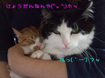 2008_04190007.jpg