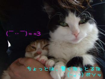 2008_04190010.jpg