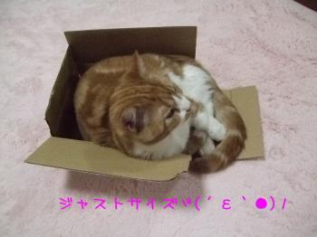 2008_04190014.jpg