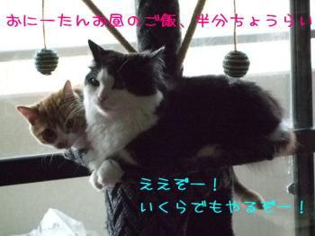 2008_05010015.jpg
