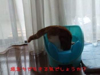 2008_05040210.jpg