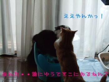 2008_05040220.jpg