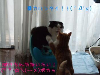 2008_05040223.jpg