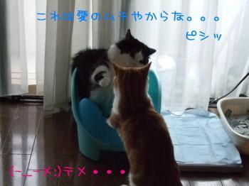 2008_05040225.jpg
