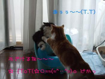 2008_05040227.jpg