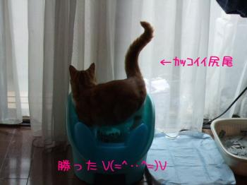 2008_05040239.jpg