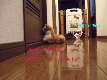 2008_05040241.jpg