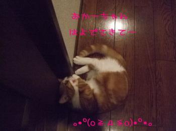 2008_05040244.jpg