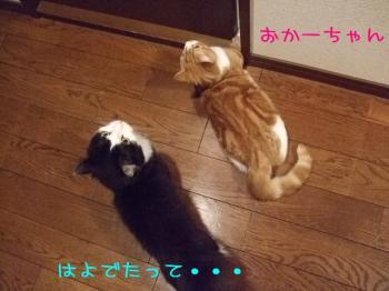2008_05040252.jpg