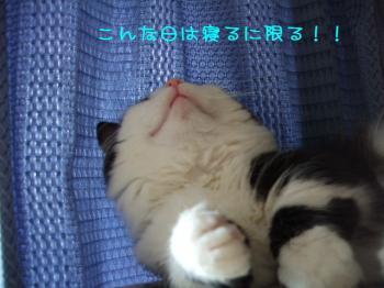 2008_05090025.jpg