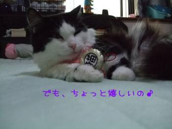2008_05090035.jpg
