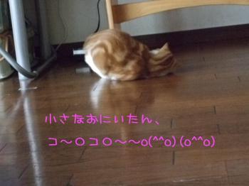 2008_05110011.jpg