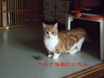 2008_05110014.jpg