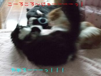 2008_05110020.jpg