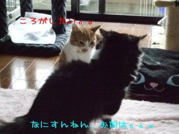 2008_05110021.jpg