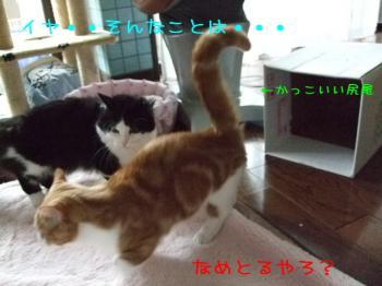 2008_05110023.jpg