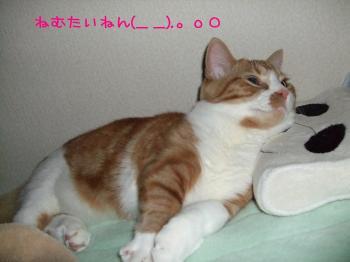 2008_05160023.jpg