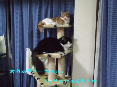 2008_05210021.jpg