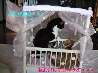 2008_05240025.jpg