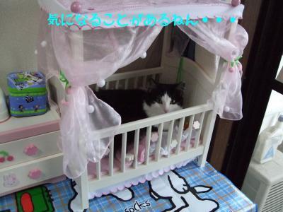 2008_05270002.jpg