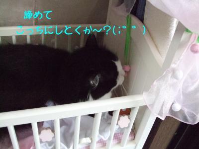 2008_05270008.jpg