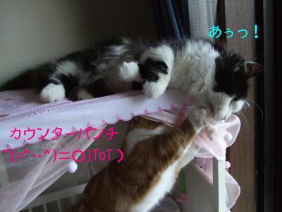2008_05270043.jpg