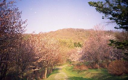 SAKURA 2007