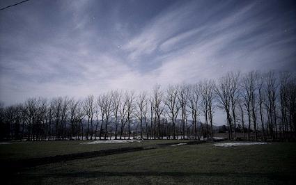 弥生地区の防風林