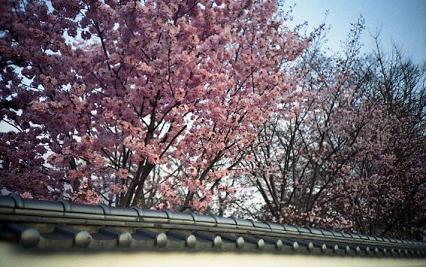 桜の季節を思い出す