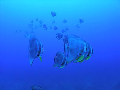 20080528b.jpg