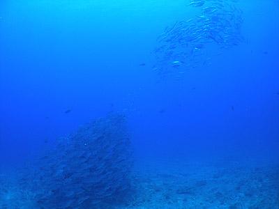 20080713f.jpg