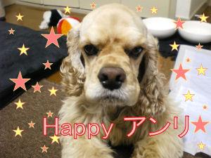 アンリ幸せになってね(*^_^*)