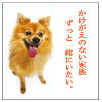 ペット用仏壇 手元供養専門店