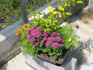 青・紫・橙・白4色の寄せ植え