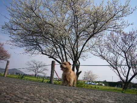 ウメの木と一緒